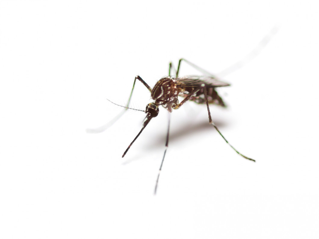 Mosquito Prevention in Fiskdale, Wilbraham & Sturbridge, MA