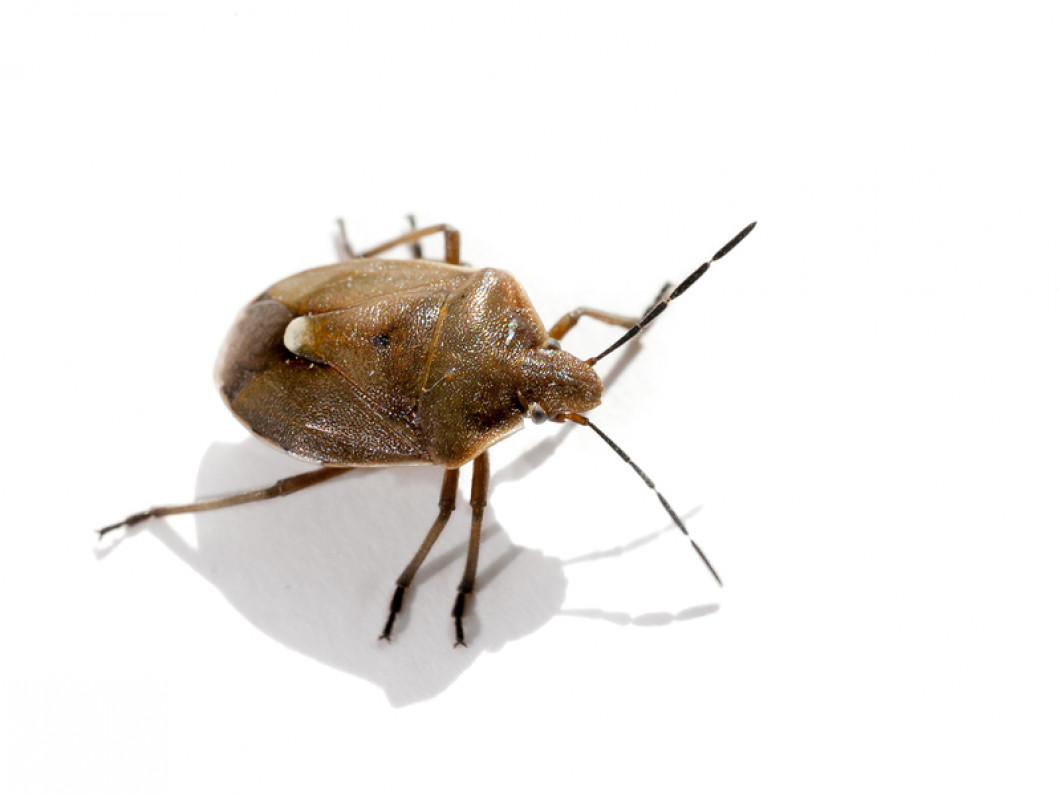 Nip Your Bed Bug Problem in the Bud